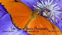 Julie Sprott Nature Photographer